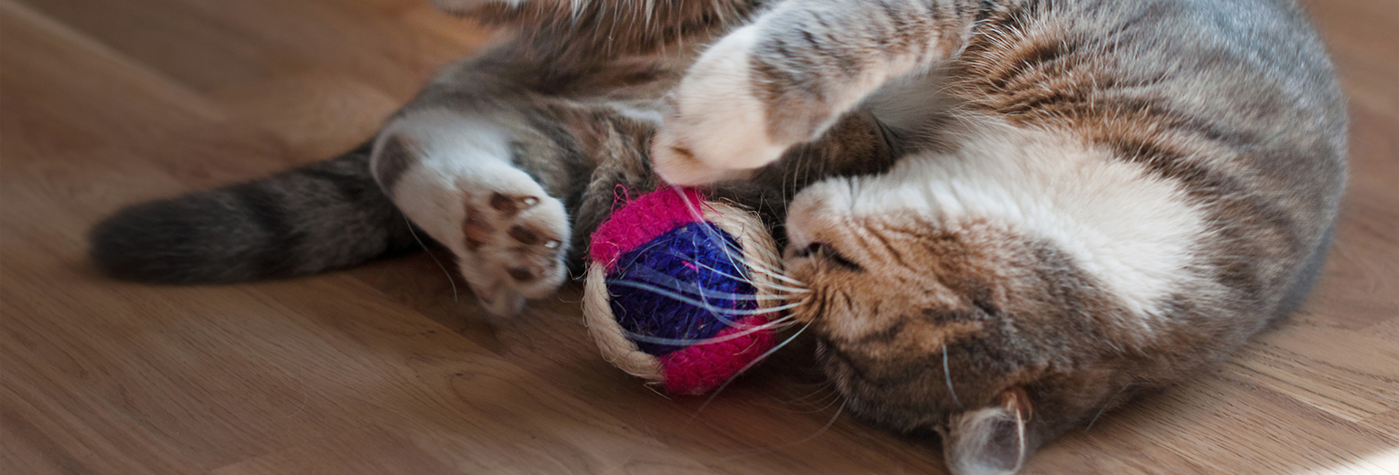 adorable cat playing